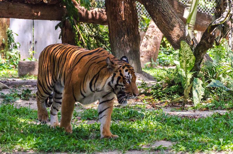 Zebras on tree