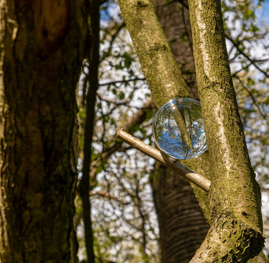 Low angle view of bubbles hanging from tree
