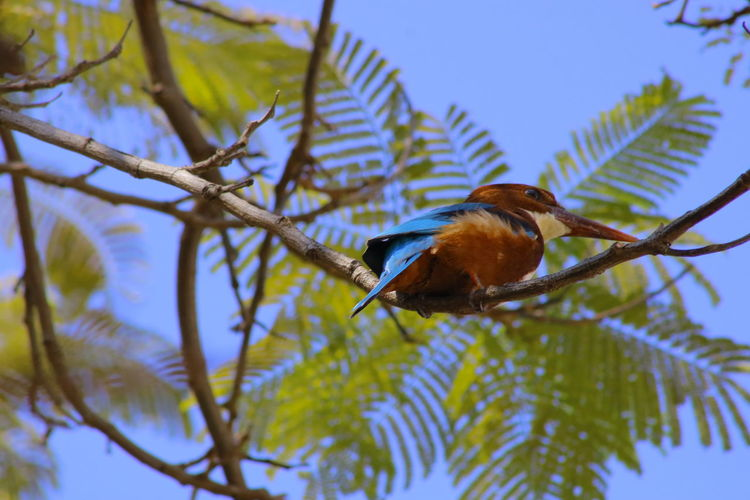 Kingfisher Collection Animal Themes Animal Wildlife Animals In The Wild Beauty In Nature Bird Branch Close-up Day Focus On Foreground Kingfisher Birds Of EyeEm Kingfisher Bird Low Angle View Nature No People One Animal Outdoors Perching Tree
