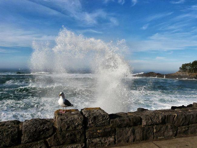 Crashing Waves  Spouting Horn Depoe Bay, OR Seagull Seawall High Tide