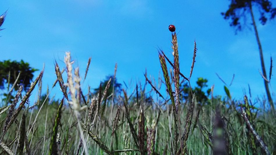 Check This Out Hello World Sunda Taking Photos Mountain Flowers Nature Flora Trass