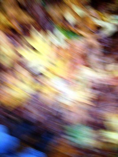 Autumn Passes In A Blur