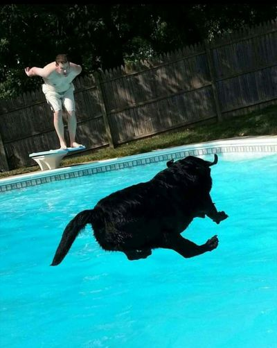 Freelance Life Jump! Jump Jumping Dog Swimming Swimming Pool Ohio, USA Rebel Rebel Rebel Rebel 👍😏🙌🙌