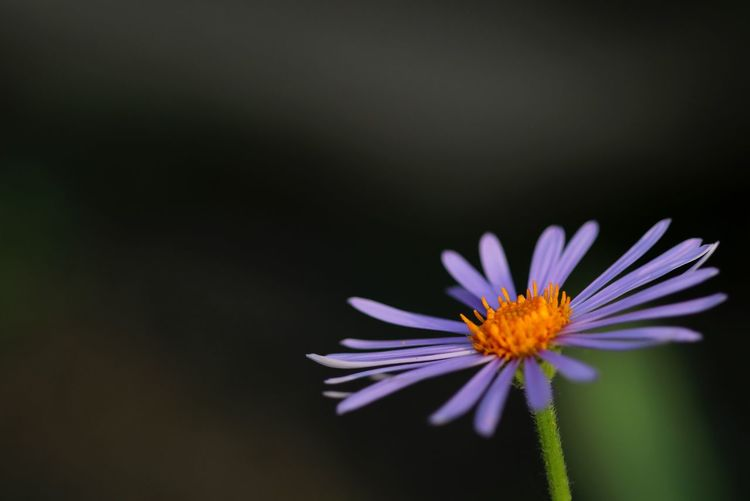 Close-up of purple blooming outdoors