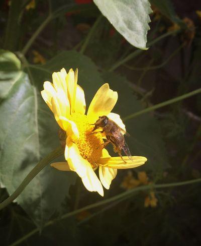 Colour Of Life Workerbee HoneyBee Meadow Flowers Flower Summer Garden IPhoneography Garden Photography Meadowflowers Beefood