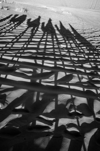 Shadow Sunlight Desert Group Outdoors Camel Riding The Sahara Focus On Shadow Nature
