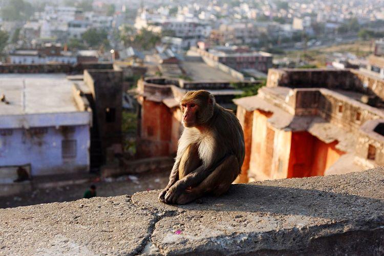 Monkey Sitting On Ledge