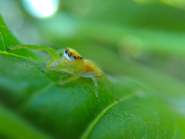 Macro Jumping Spider Insect Close-up Nature Nature Narrow Depth Of Field One Animal Spider
