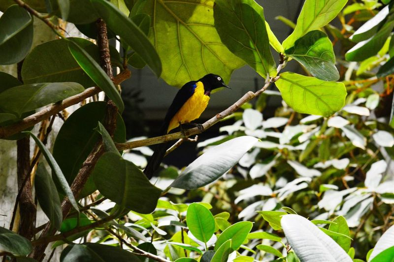 Animal Themes Animal Wildlife Animals In The Wild Beauty In Nature Bird Branch Close-up Day Green Color Growth Leaf Nature No People One Animal Outdoors Perching Plant Tree
