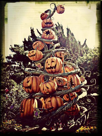 a pumpkin tree