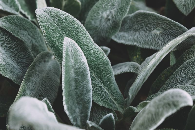 Growth Leaf Plant Part Plant Green Color Close-up Nature No People Beauty In Nature Day Full Frame Outdoors Frost Cold Temperature Freshness Selective Focus Backgrounds High Angle View Natural Pattern