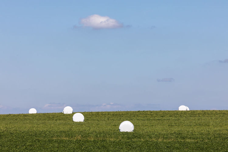 Hay bales wrapped in white plastic on grassy field against blue sky