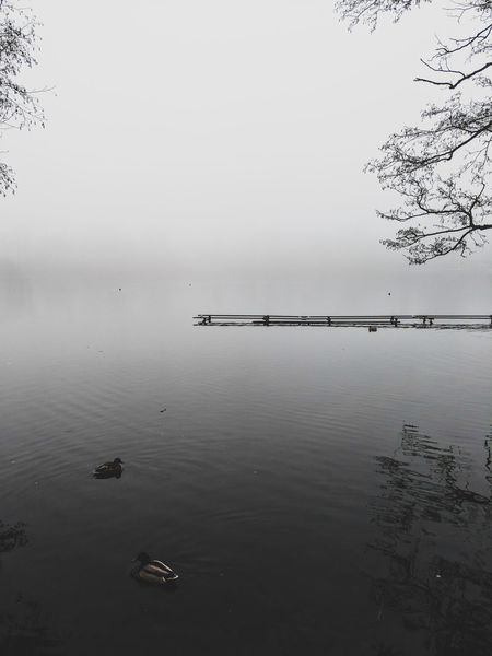 Fog Dreamy Reflection Water Flock Of Birds No People Animals In The Wild Outdoors Tranquility Lake Day Bird Sky Beauty In Nature Nature