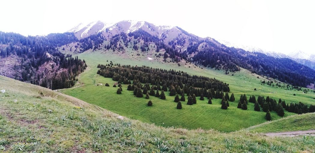 Кок Жайлау Kazakhstan Almatymountains Tree Rural Scene Agriculture Field Tea Crop Sky Landscape Green Color