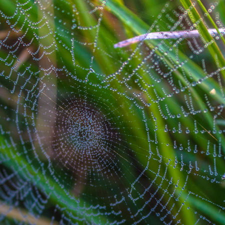 Spider Web Natural Pattern Fragility Nature Water Full Frame Drop Wet Selective Focus Green Color Pattern Beauty In Nature Focus On Foreground Dew Day Office Art Art For Sale Wallart India Inspired Stills Majestic Beauty In Nature Cobwebs Cob Web Spiderweb
