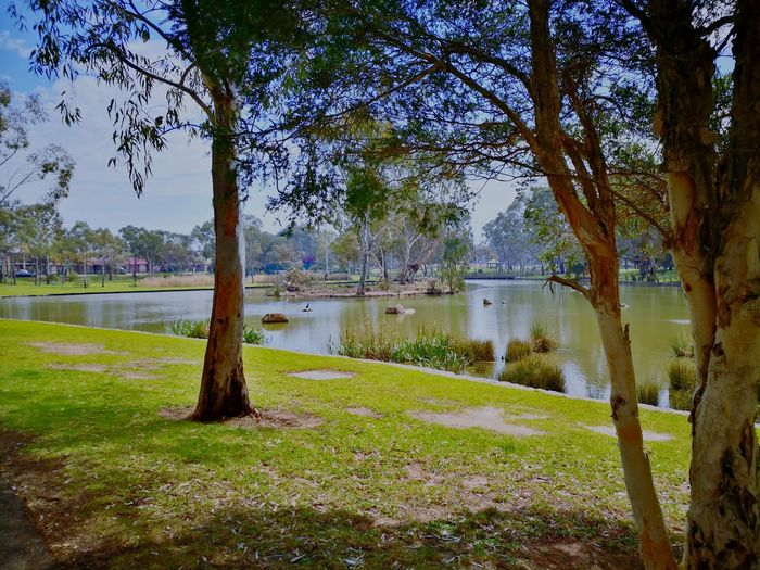 Adelaide, South Australia Relaxing Meditation Grass Lake Growth Nature Outdoors Green Color Tranquility No People Sky Day Scenics Beauty In Nature EyeEmNewHere