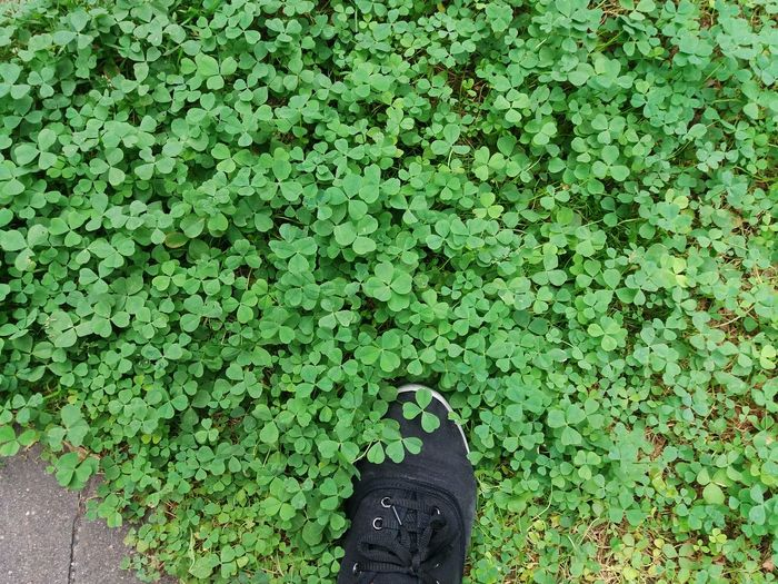 Low Section Shoe Person Personal Perspective Human Foot Standing Footwear Plant Green Color Day Outdoors Brown Green Growth Nature Tranquility Clover Clover Leaf Clover Field Cloverleaves Botany Botany Close Up Flora