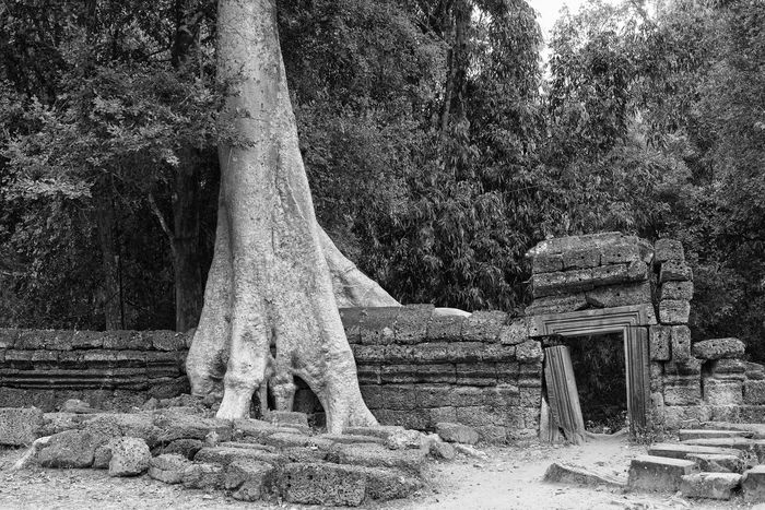 Ta Prohm ASIA Beauty In Nature Black And White Buddhist Temple Bw Cambodia EyeEm Best Shots - Black + White EyeEm New Here Forest Growth Landscape Nature No People Outdoors Resist Roots Ruins Ta Prohm Temple The Secret Spaces Tree Tree Roots  Tree Trunk Tree Trunk EyeEm Diversity Art Is Everywhere The Architect - 2017 EyeEm Awards The Great Outdoors - 2017 EyeEm Awards Perspectives On Nature Stories From The City