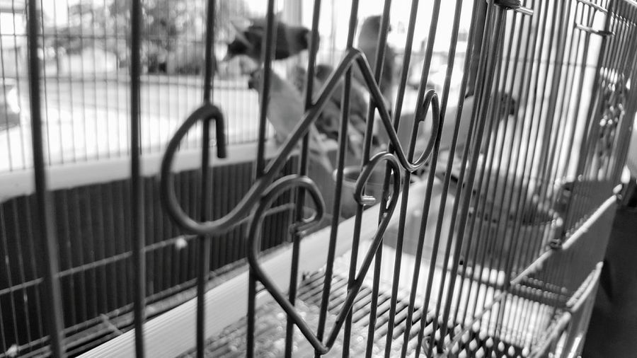 It's all in the details No People Close-up Metal Detail Cage Birds Lovebirds In Background Black And White Birdcage Animal Themes Caged Birds Art Is Everywhere