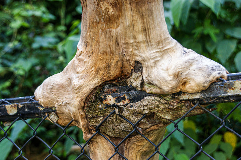 Close-up of tree trunk by fence in forest