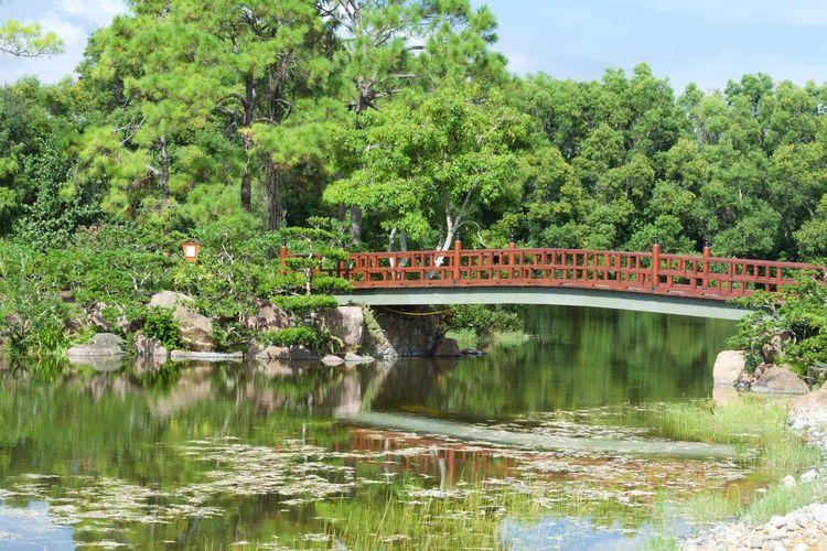 Nature Japanese Garden Bridge Garden First Eyeem Photo No People Japanese Culture