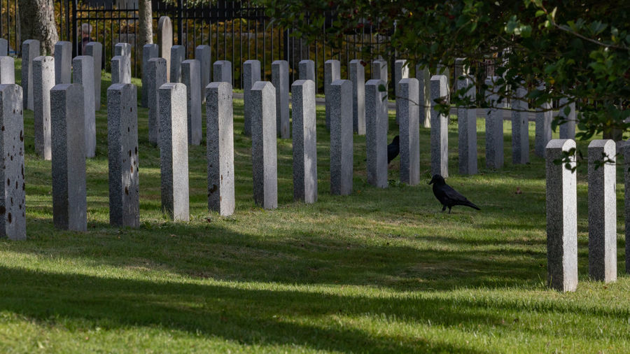 Military cemetery in Halifax Nova Scotia. Animal Themes Animal One Animal Animal Wildlife Bird Animals In The Wild Plant Vertebrate Fence Boundary Barrier Grass Nature No People Day Full Length Outdoors Protection Tree Raven - Bird Cemetery Military Headstones In A Row