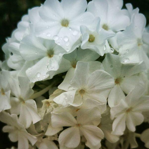Vancouver Washington Flowers