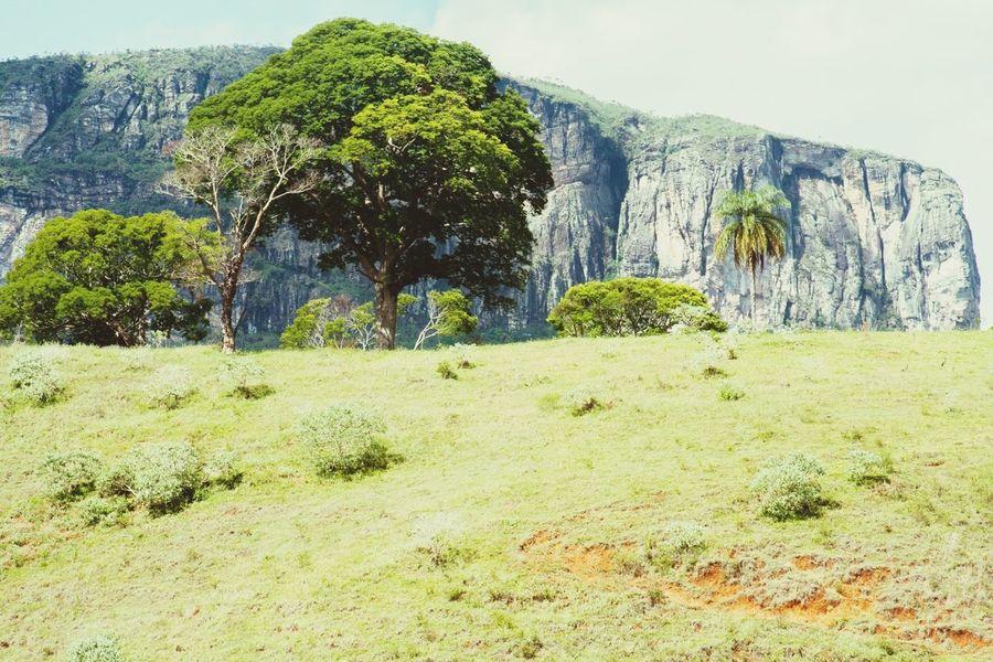 Trees Rock Wall Senhora Do Carmo