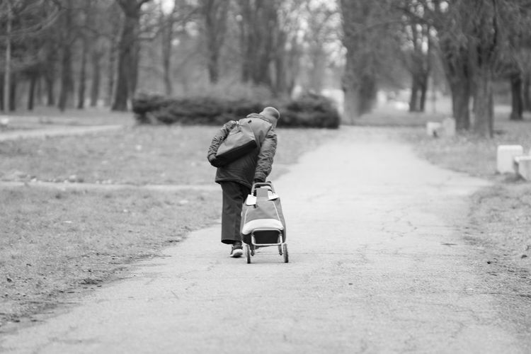 Rear view of boy in park