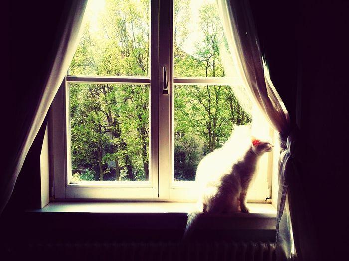Viktor und die Sonne Cat Cat Watching Window Windowporn