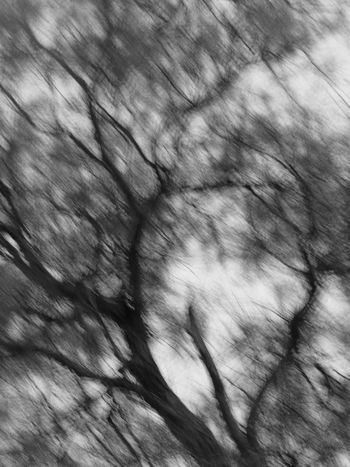 Blured Tree_collection  EyeEm Gallery EyeEm Taking Pictures Nature Out Of Control Trees And Sky Out Of Focus Twigs Nature Photography EyeEm Nature Lover No Focus Nature_collection Natural Pattern Eye4photography  Backgrounds Photography Taking Photos
