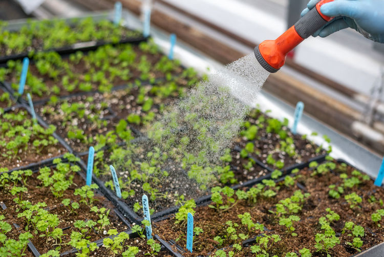 Growth Plant Dirt Nature Green Color Gardening Greenhouse Food And Drink Vegetable Selective Focus Day Hose Agriculture Outdoors Motion Hand Food Seedling Garden Hose Spraying Plant Nursery Watering Plants Gardening Springtime