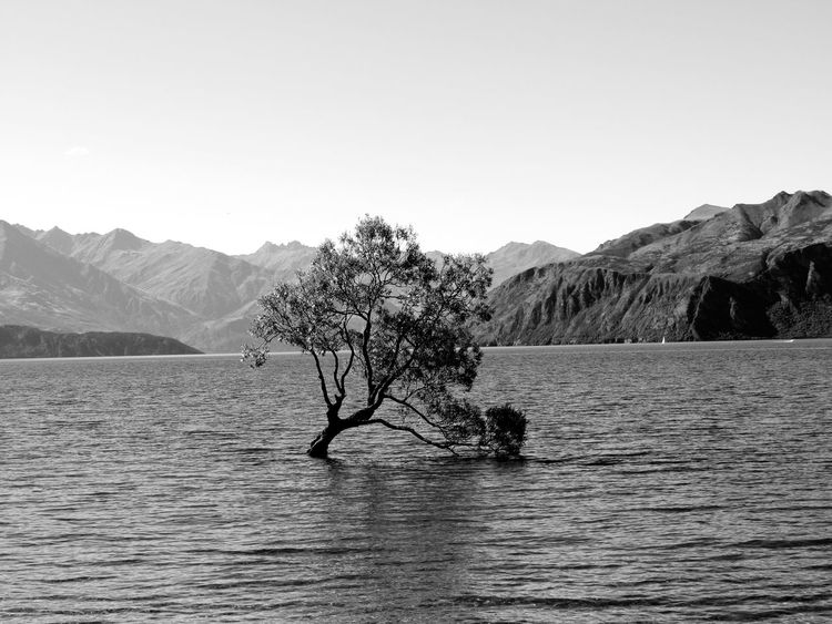 Travelling Around The World EyeEmNewHere Tree Tree In Water Black And White Time Stop Wanaka Tree Wanakalake Lake Landscape Nature New Zealand Outdoors Wilderness Beauty In Nature Scenics