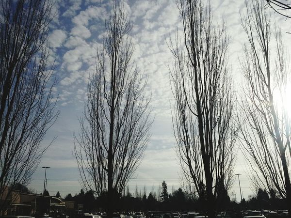 Portland Or  Beautiful Day Clouds And Trees Wandering Around Aimlessly January 2015