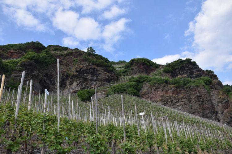 Wein, Wein, Wein Winefields Sky Plant Cloud - Sky Beauty In Nature Tranquility Growth Mountain Field