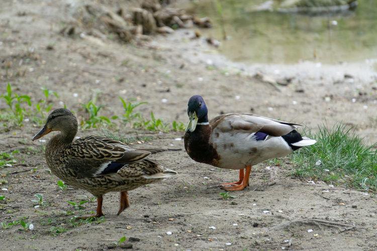 Bird Group Of