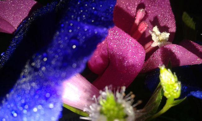 Iranian_photography Nightphotography Night Photography Close-up EyeEm Flower Flower Nature Eye Em Nature Lover EyeEm EyeEm Nature Lover EyeEm Best Shots - Nature Flower Photography Nature Photography Pink Pink Flower Lilies Pink Color The Week On EyeEm EyeEmNewHere
