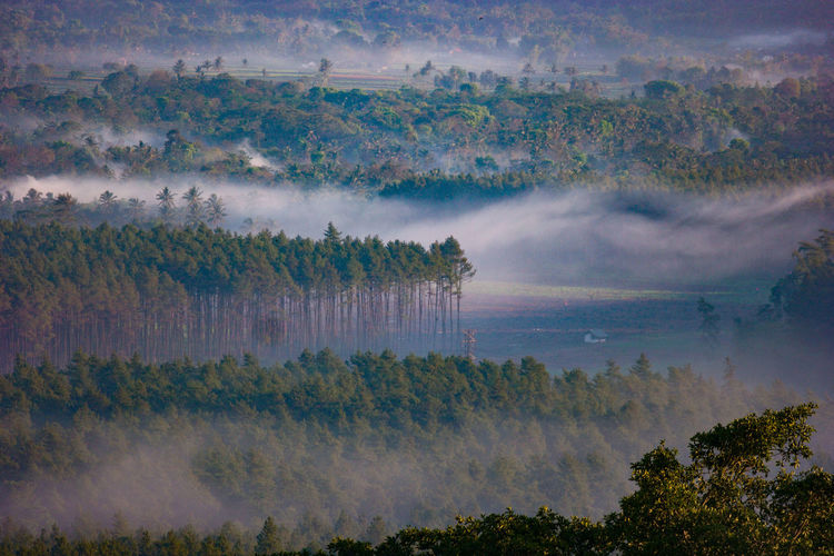 Panoramic View Of Trees On Landscape Against Sky
