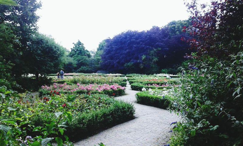 Beautiful garden in Vondelpark, Amsterdam ❤