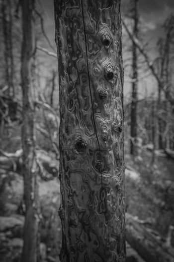 Perspectives On Nature Postcode Postcards Mountain Nature Beauty In Nature Outdoor Photography Nature Collection Lost In The Landscape Tranquil Scene Outdoor Pictures Outdoor Scenics Blackandwhite Photography Blackandwhitephotography Black&white Black And White Photography Black And White Collection