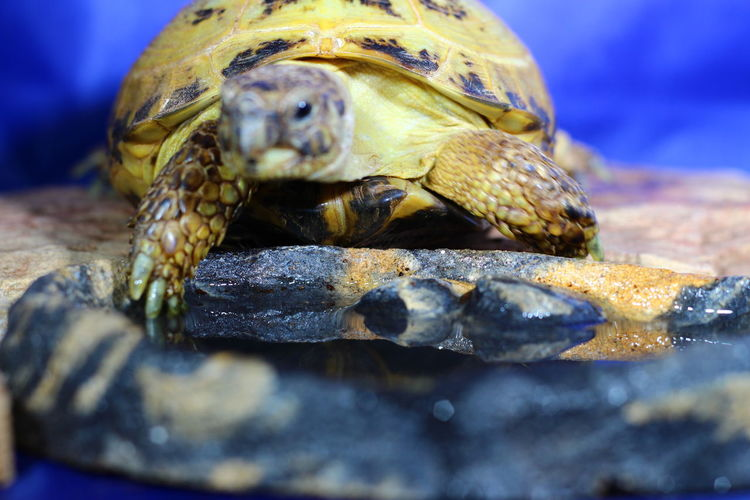 EyeEm Selects Nature Animal Themes Olga Mulugeta Бостон The Week On EyeEm Reptile Indoors