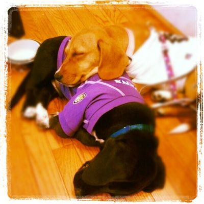 Two Adorable and Adoptable Puppies came to visit today at WorkPlayBark