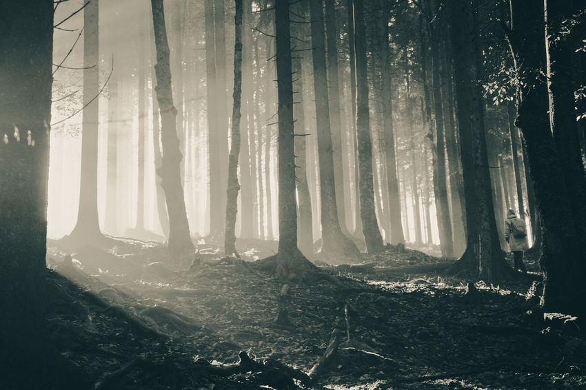 Blinding Sunlight Forest Nature Outdoors Sunlight Sunrays Tree Woman In Forest