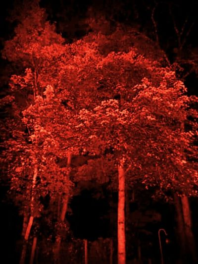 Cities At Night The Woods The Great Outdoors - 2016 EyeEm Awards Nature's Diversities - 2016 EyeEm Awards First Eyeem Photo Red Trees At Night Night Night, Sleep Tight Feel The Journey Night Travel The Week On Eyem The Magic Mission Ice Age Still Life Tranquility My Year My View