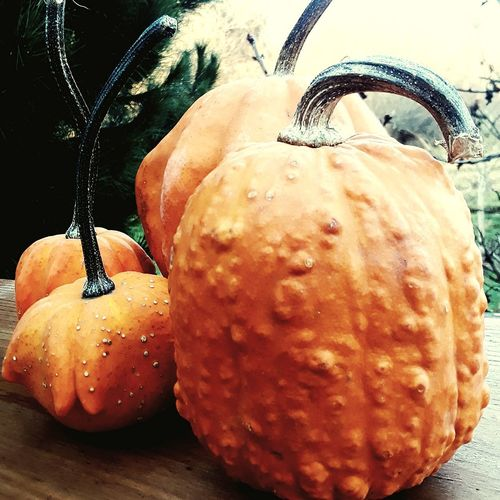 still have my pumpkins in December Outdoors PNW Pumpkins Fall December Food Freshness Close-up Fruit No People Day