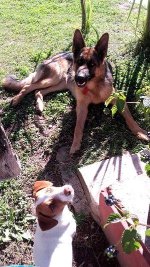 High angle view of dog playing on grass