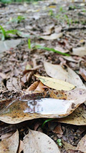 Autumn 🍁 Leaf