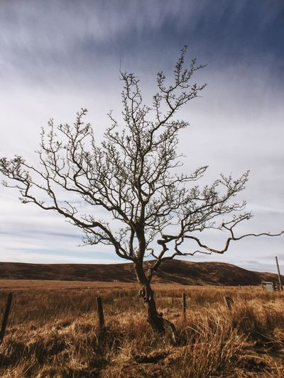 Lone tree on Fairlie Moors Moment Lens MomentLensWide Vscocam VSCO IPhoneography Scotland Scotlandsbeauty First Eyeem Photo