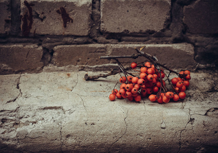 Autumn branch of rowan berries on a background of gray concrete