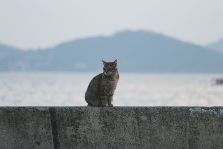 Cat on retaining wall against sky